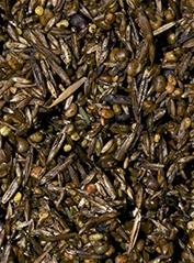 Graines inoculées de spores de mycéliums