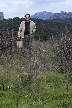 vignes 2 ans après : une couverture végétale plus d'indicateurs de pollution chimique grave