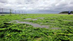 alguesvertes